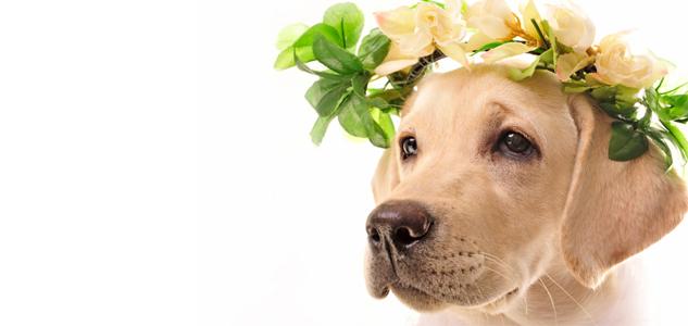 flower-pet