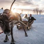 Wedding reindeer cart