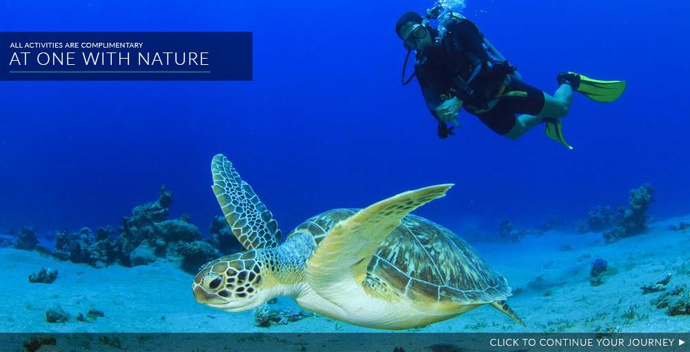 scuba diving Turtle Island Fiji