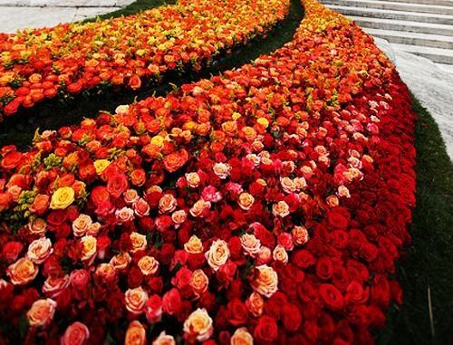 Longest Lasting Roses